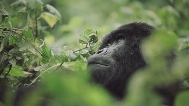 Rwanda4-640x360