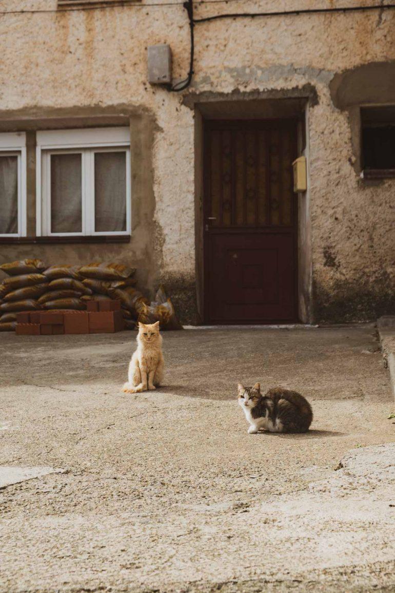 Los gatos de Trasmoz